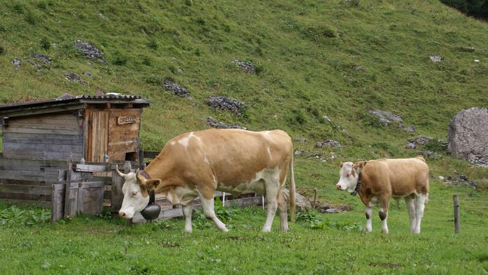 Moooooo - ving to Switzerland call Britannia Appleyards 0800 591 589